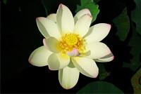 森川花はす田